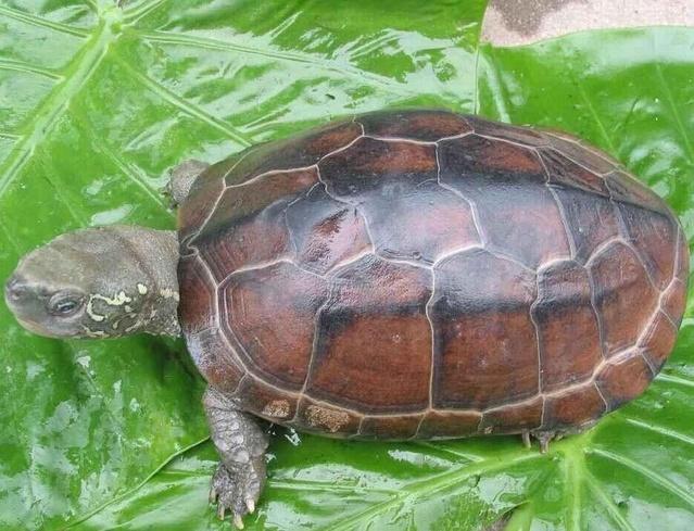 养龟与风水
