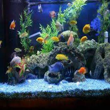 风水玄学大师白鹤鸣教你家中或办公室养鱼养几条最好,才能招财旺风水